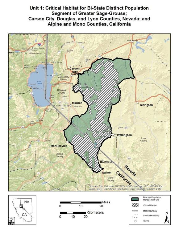 sage-grouse-pine-nuts-map