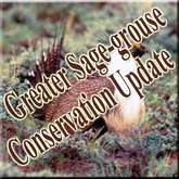 SAGE GROUSE ISSUE UPDATE