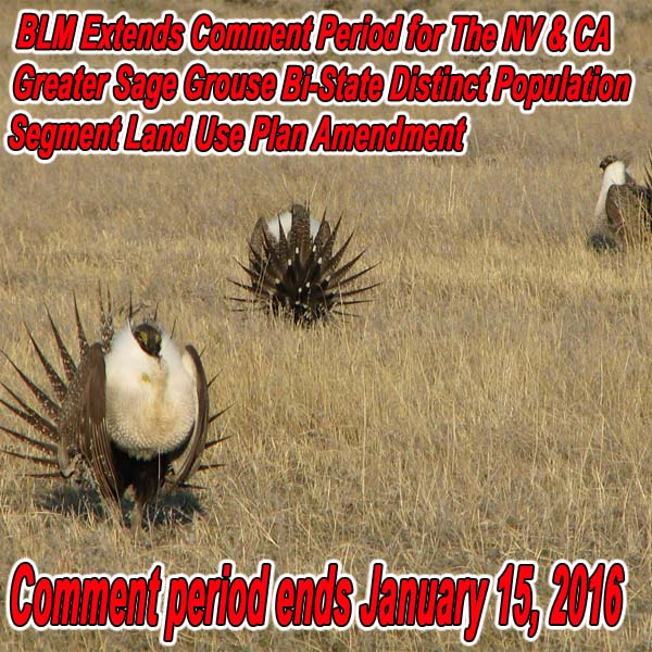 NEVADA - BLM Extends Comment Period for The NV & CA Greater Sage Grouse Bi-State