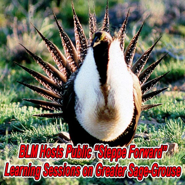 UTAH - BLM Hosts Public Learning Sessions on Greater Sage-Grouse